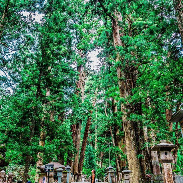 Wakayama la guinda pica a nuestro viaje por Japn sehellip