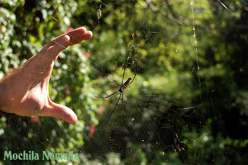 Arañas como manos