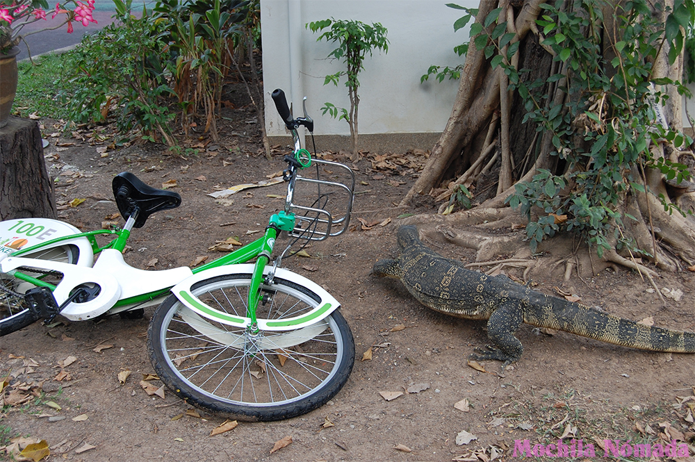 Biciletas gratis para turistas en Bangkok
