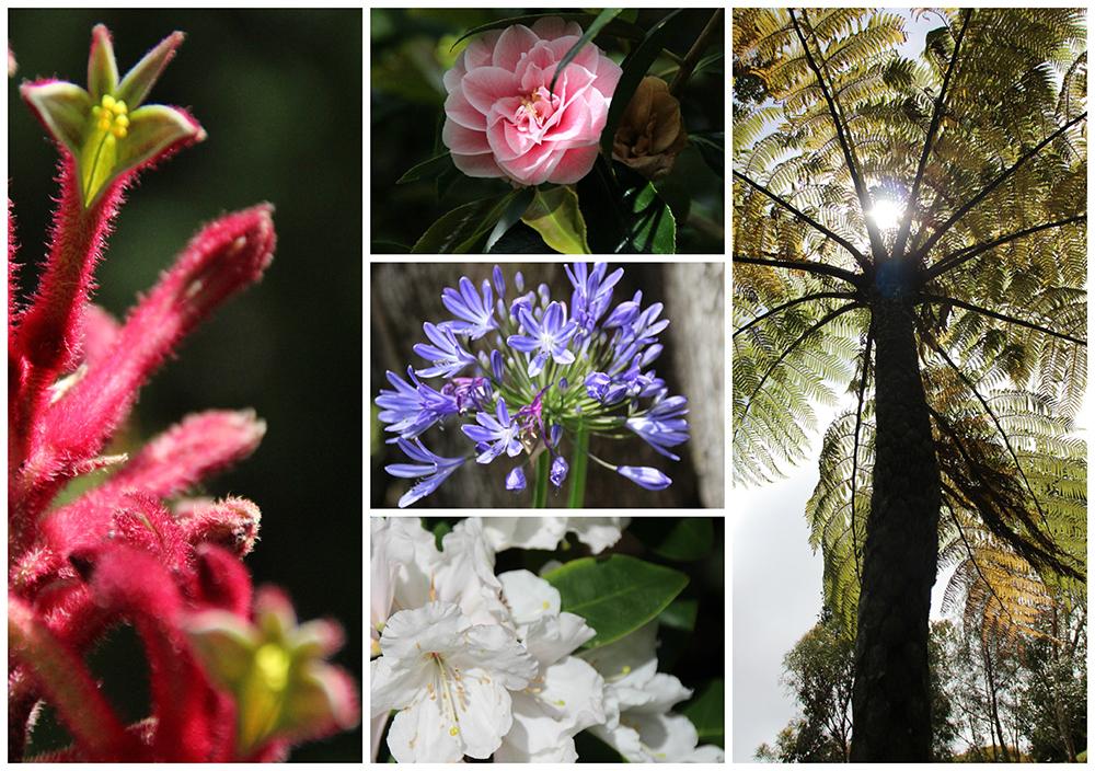 jardin-botanico-wellington