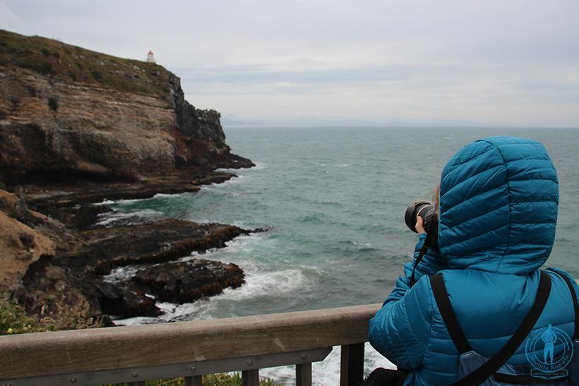 otago-peninsula-albatros
