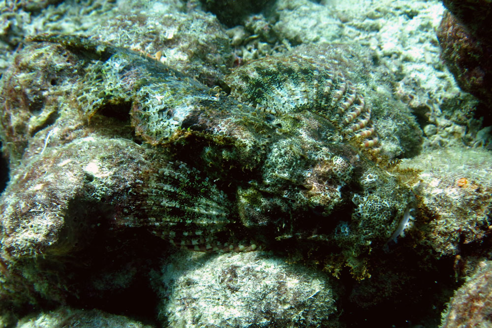 buceo-indonesia-1