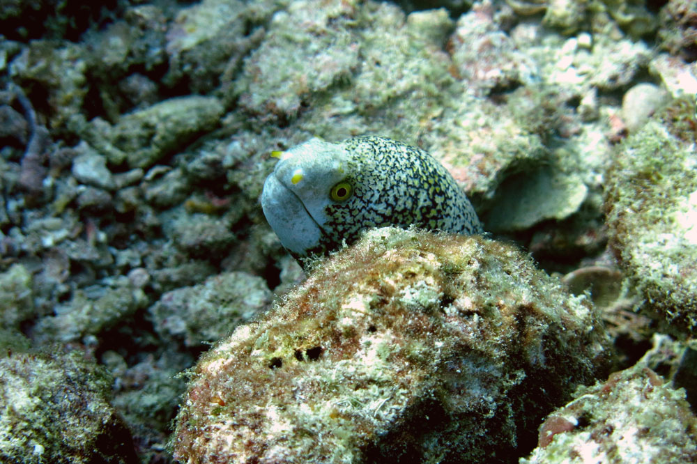 buceo-indonesia-2