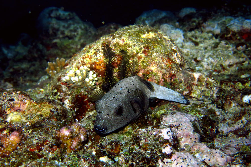 buceo-indonesia-3