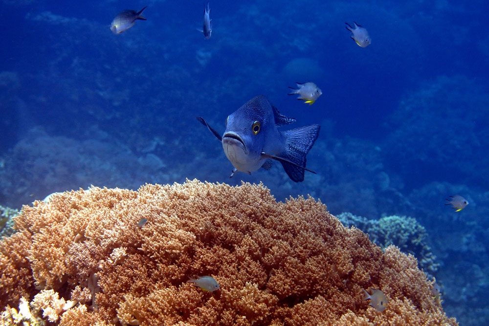 buceo-indonesia-4