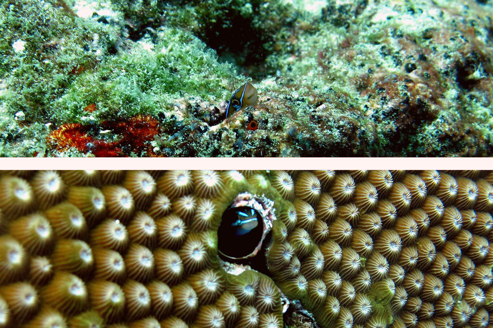 buceo-indonesia-6