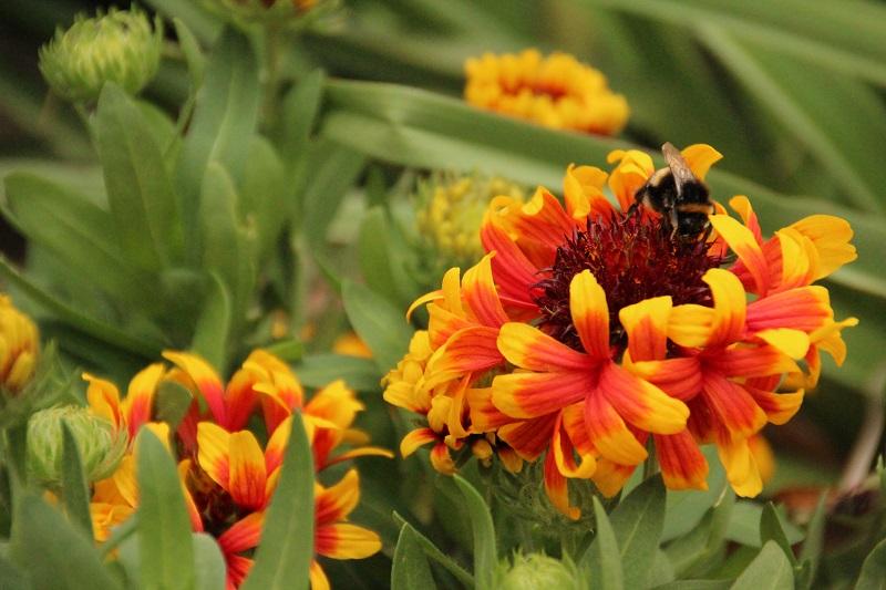Jardín Botánico de Wellington – Vlog de Viajes