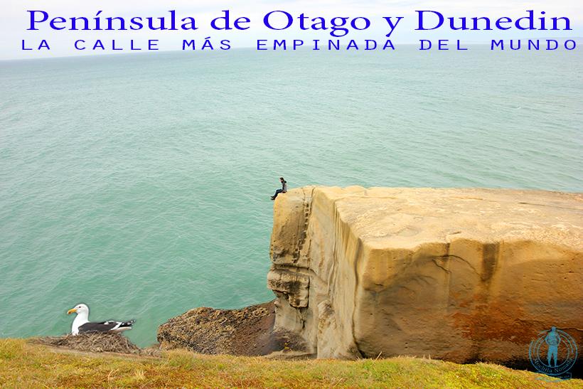Dunedin y la Península de Otago (la calle más empinada del mundo) – Parte 2