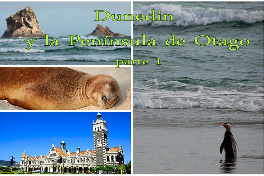 Dunedin y la Península de Otago (en busca de los pingüinos) – Parte 1